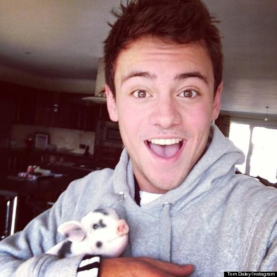 tom daley pig
