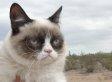 Oakland Internet Cat Video Festival Showcases The Web's Finest Felines (VIDEOS)