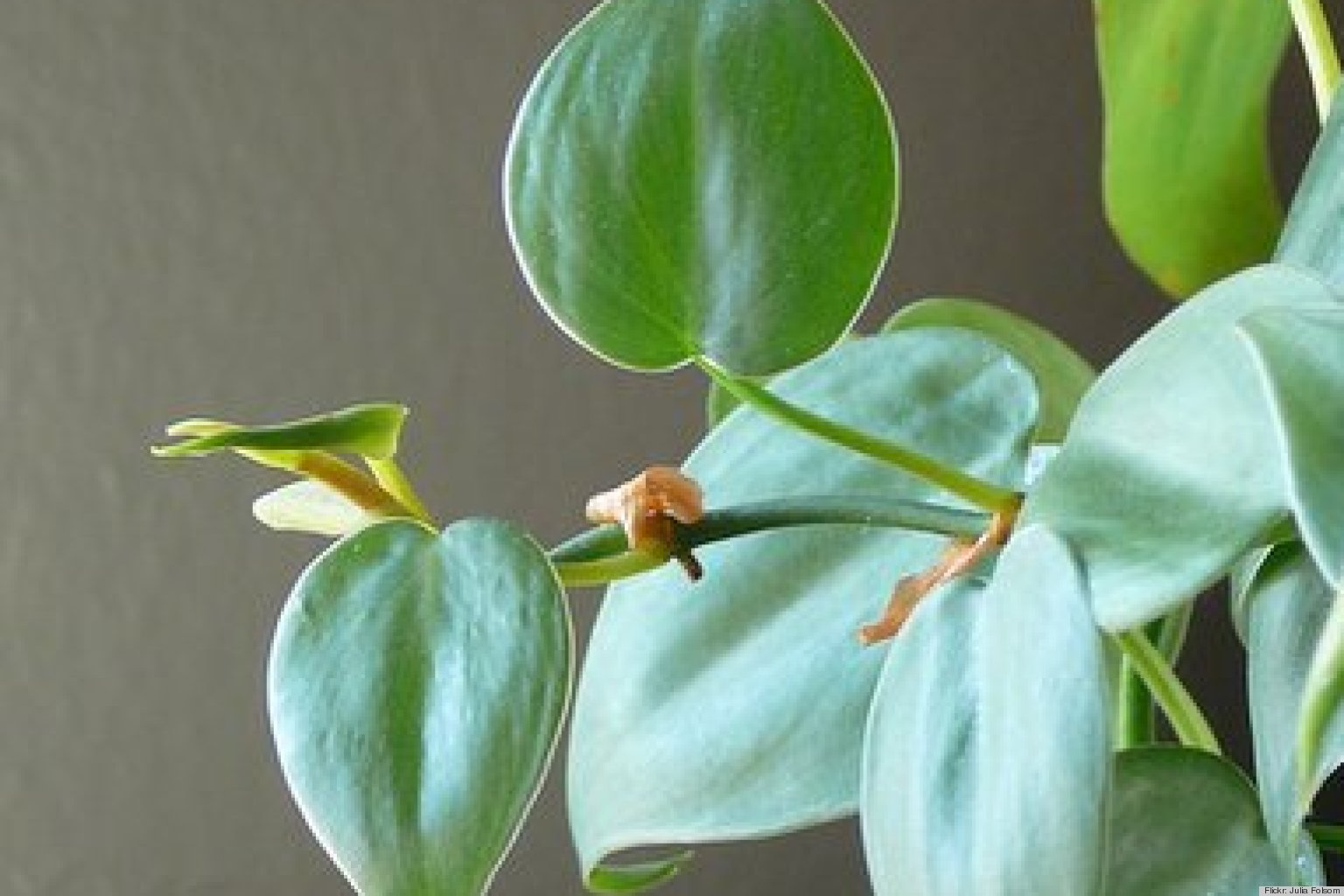 best houseplants to destress your home and purify the air, Natural flower