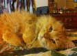 Cat Who Lost Ear Defending Kittens Gets New Home (PHOTOS)