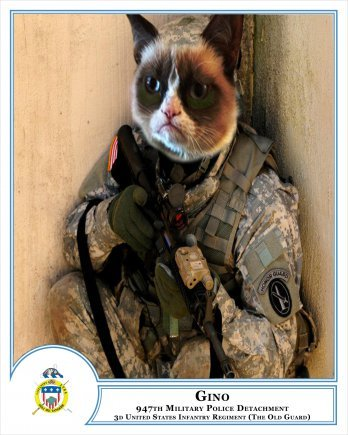 armycat
