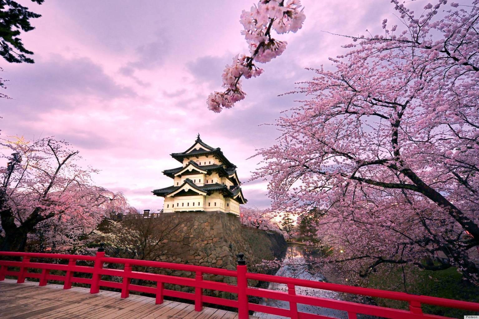 Japanese Cherry Blossom Trees Bursting Into Bloom Make Us ...