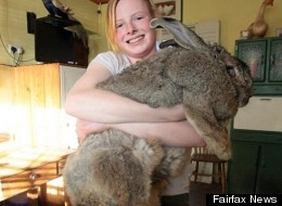 Ralph Worlds Largest Rabbit
