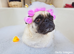 Animales que adoran la hora del baño (VIDEOS)