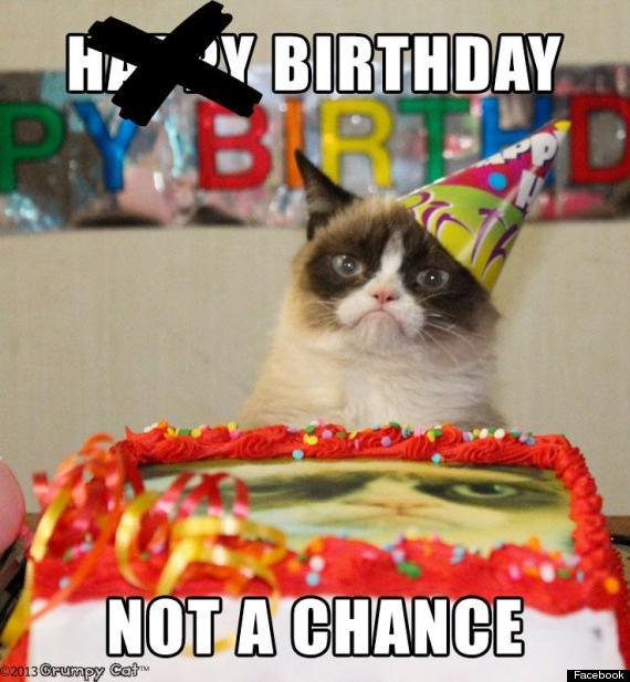 grumpy cat celebrates her first birthday photos huffpost
