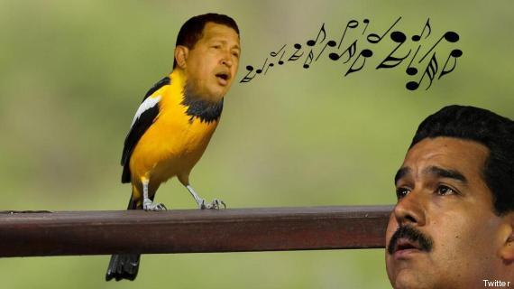 Pájaro con cejas