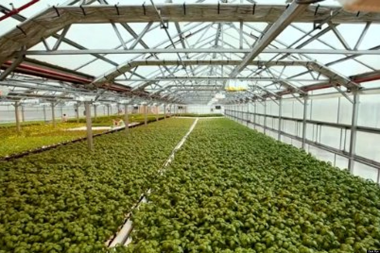 Gotham Greens Rooftop Farming In New York City Dark Rye