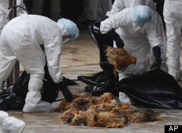 H7n9 Bird Flu Hong Kong