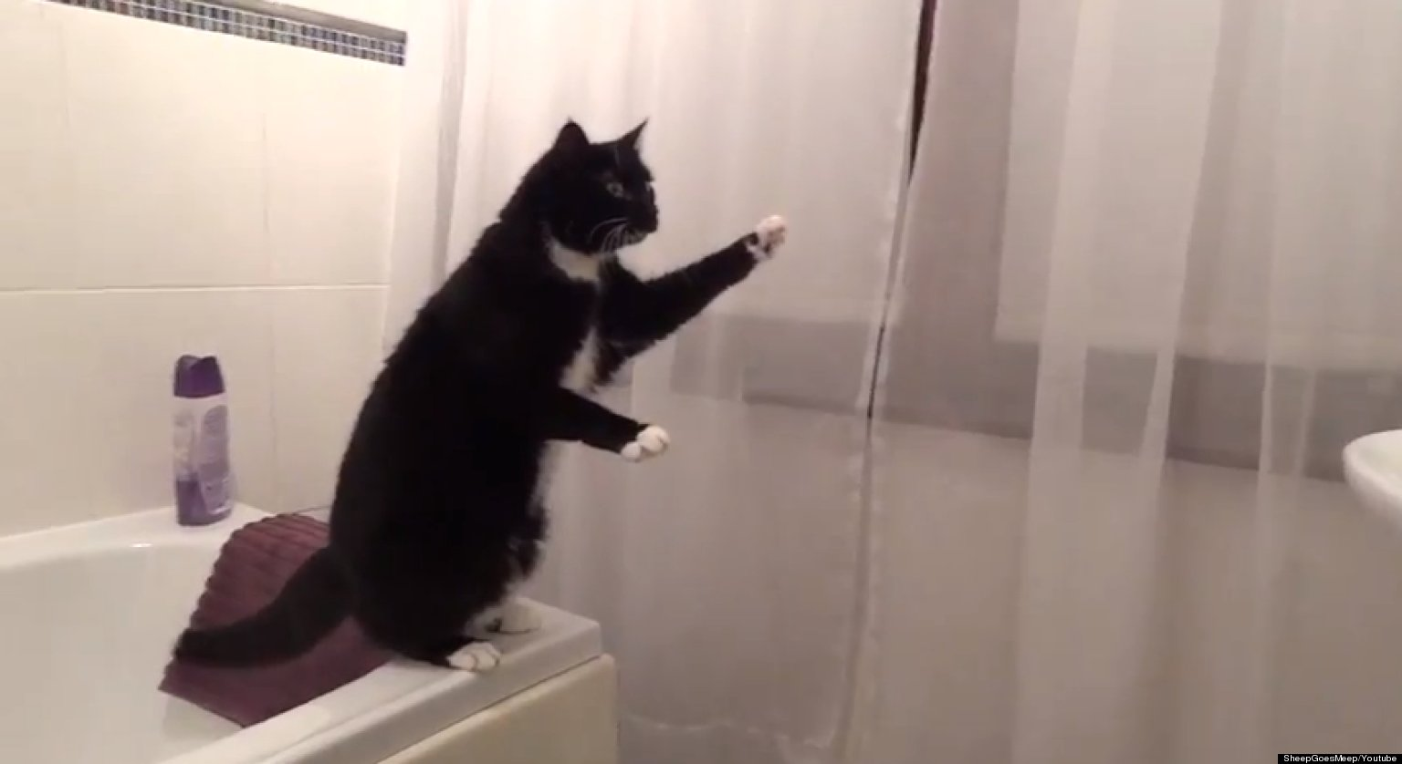 Bathroom Mirrors Canada >> Cat Poses In Mirror, Waves At Reflection (VIDEO)