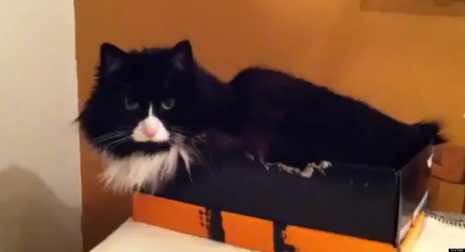 warming cat beds