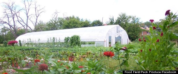 PECK PRODUCE DETROIT URBAN FARM