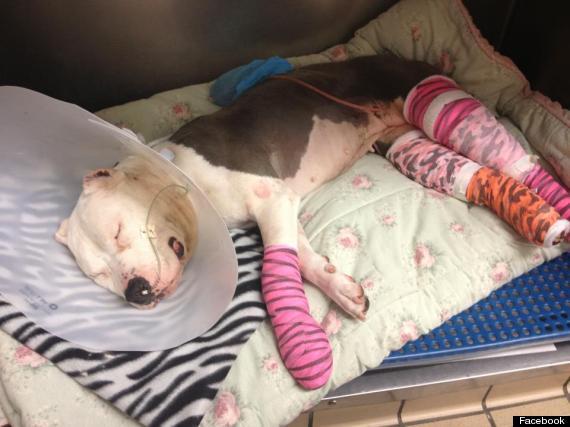 baby girl dog shot