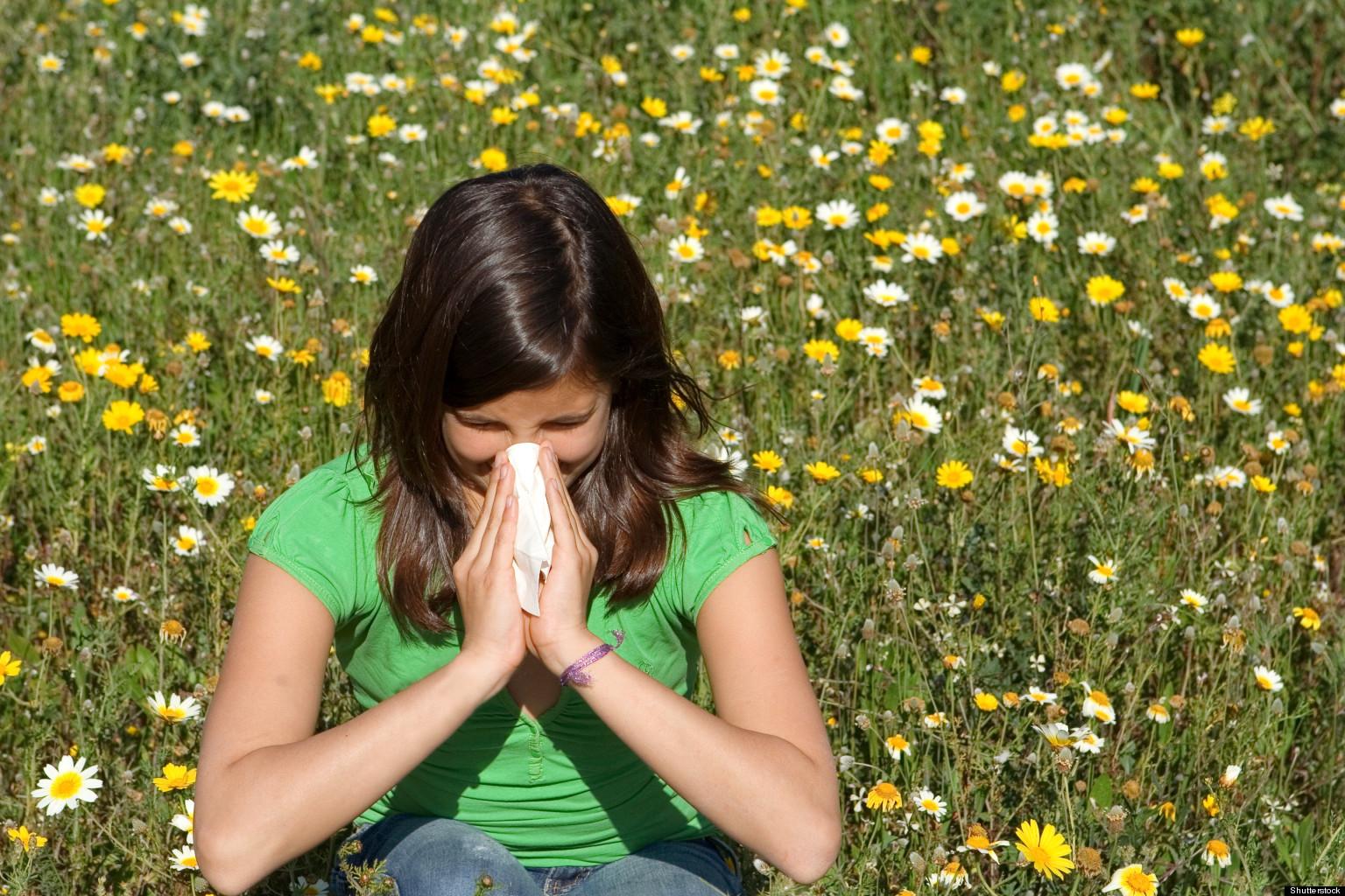 Ragweed Allergy in Spring Allergies Spring 10 Things