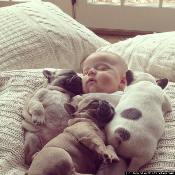 Just too cute: SEE Sleeping baby covered in French bulldogs (PHOTO)