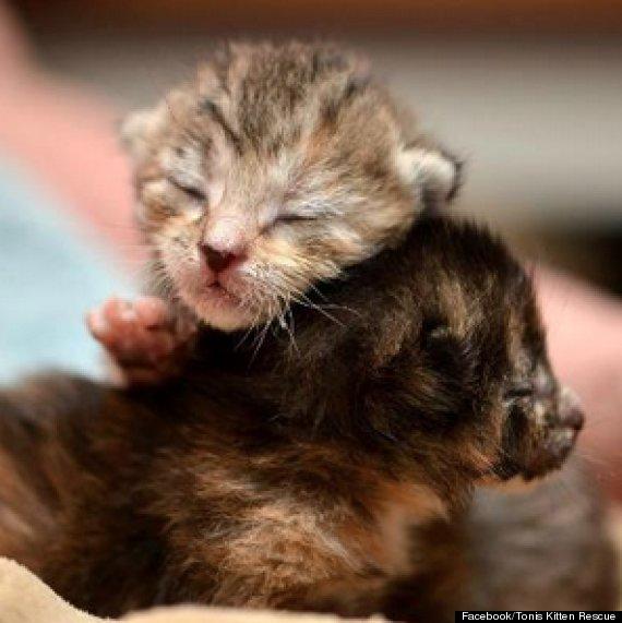 tonis kitten rescue
