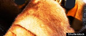 China Fur