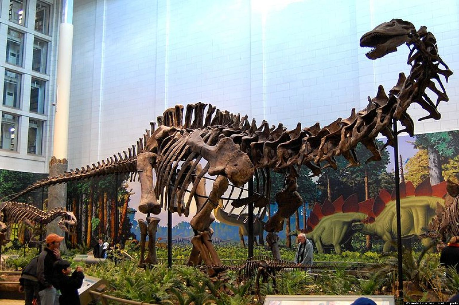 Brontosaurus Not Real? Dino Is Actually Apatosaurus & Other Misconceptions Continue (VIDEO