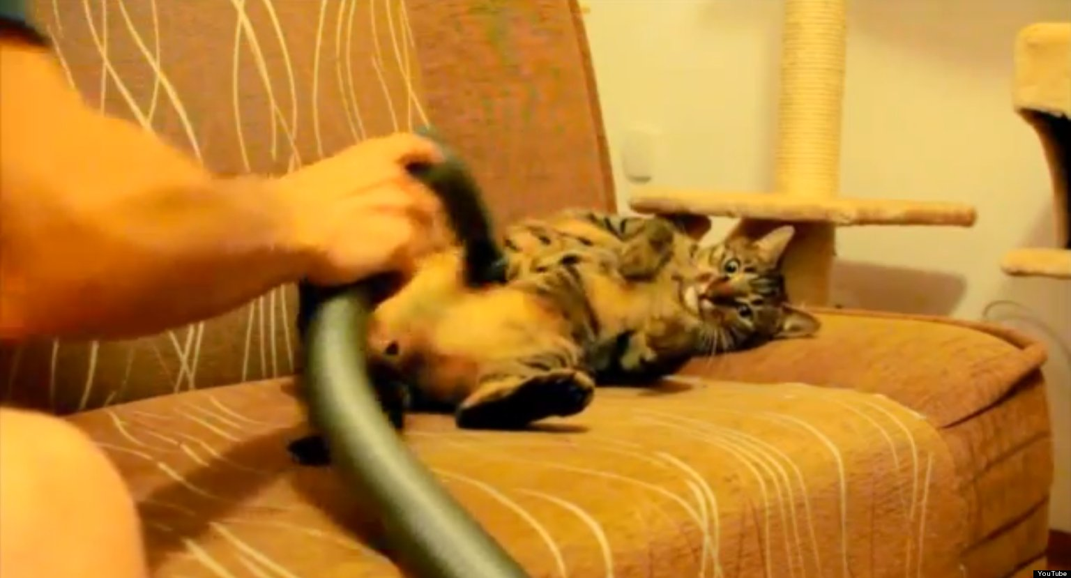 Cat Likes Being Vacuumed  Video