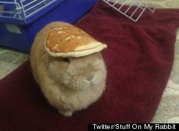 LOOK: Rabbit Wears Pancake, Twitter Swoons