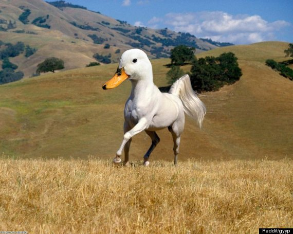Animal mash ups the best use of photoshop yet pictures huffpost