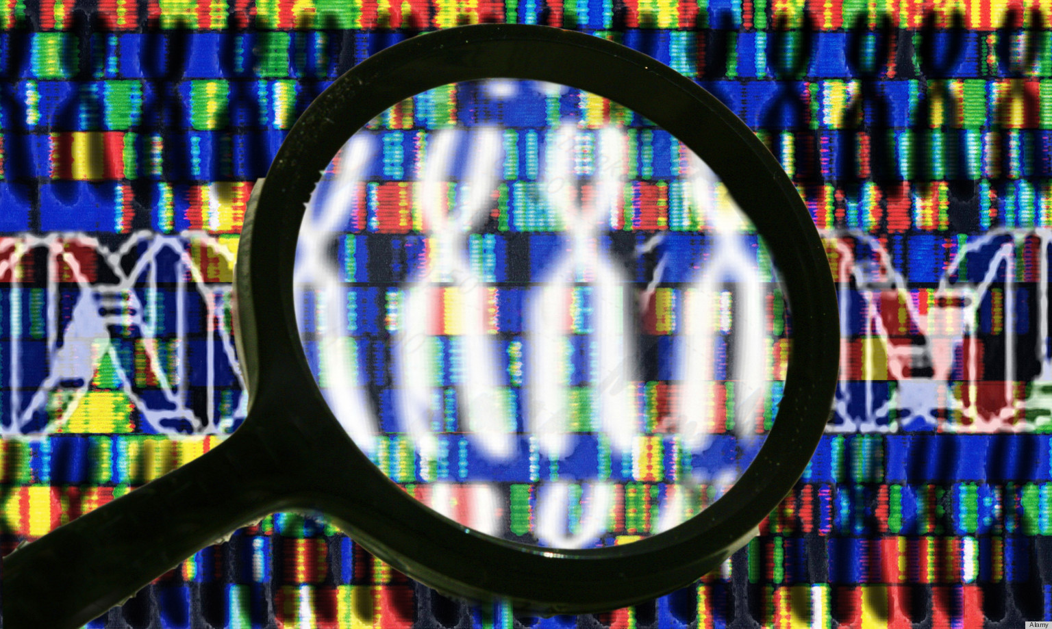 human genome project information The human genome project (1990-2003) was a public project whose two central goals were to sequence the entire human genome and find all of the genes within it.