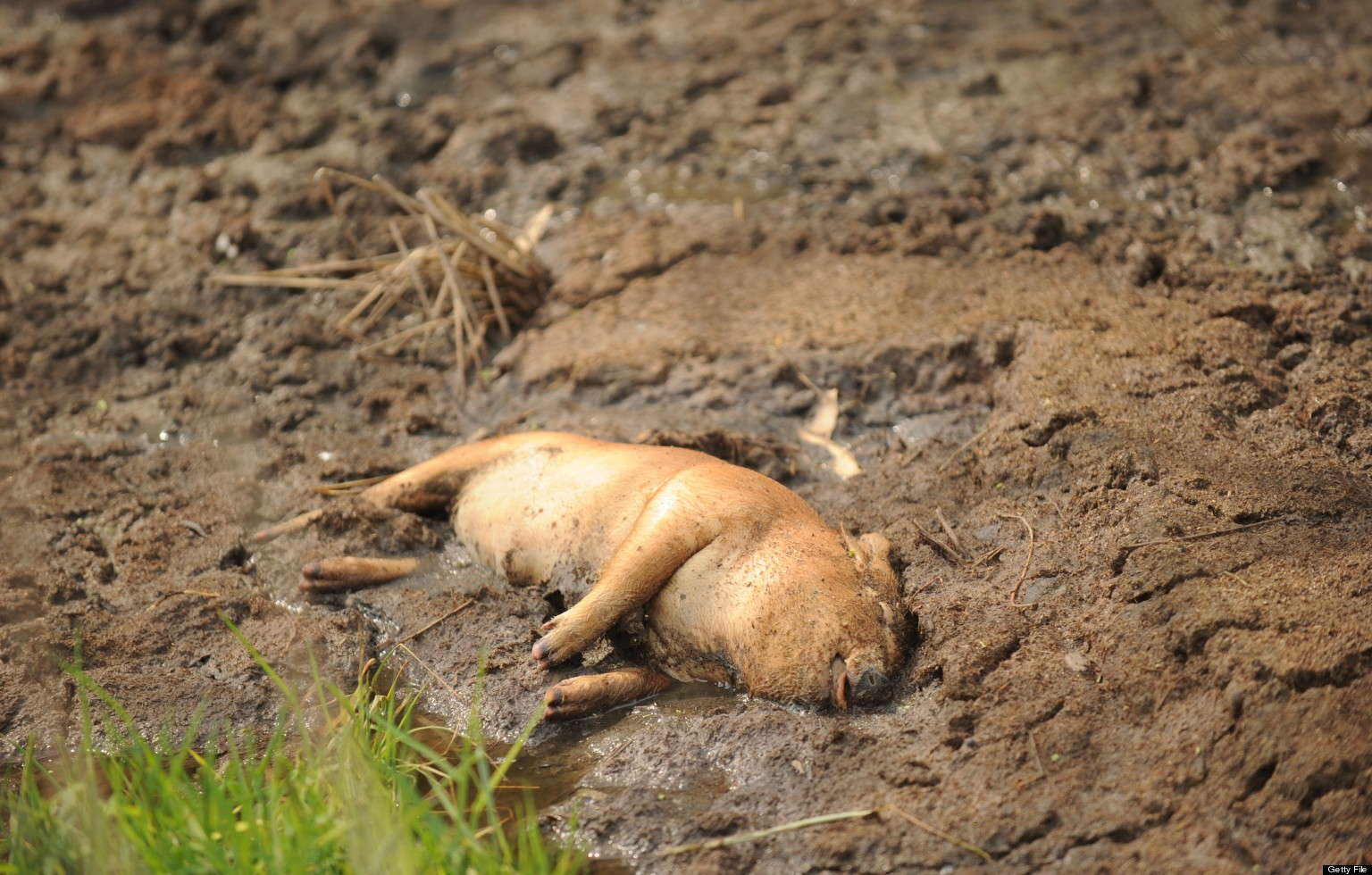 More Dead Animals Found In China