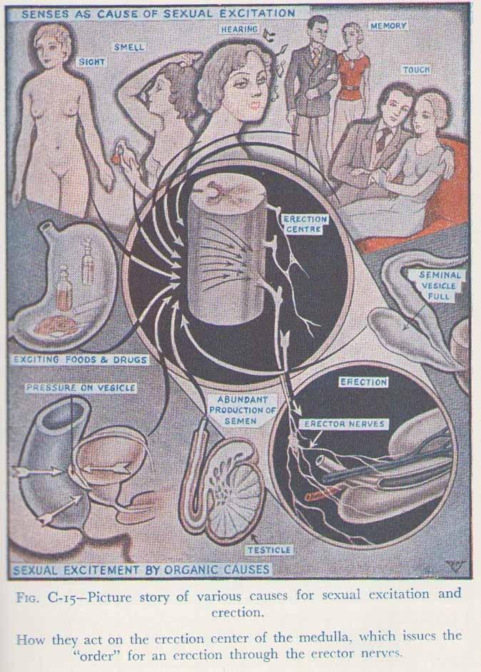 sex encyclopedia 1950