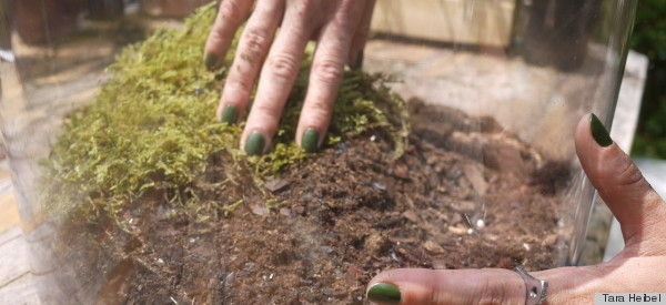 planting moss