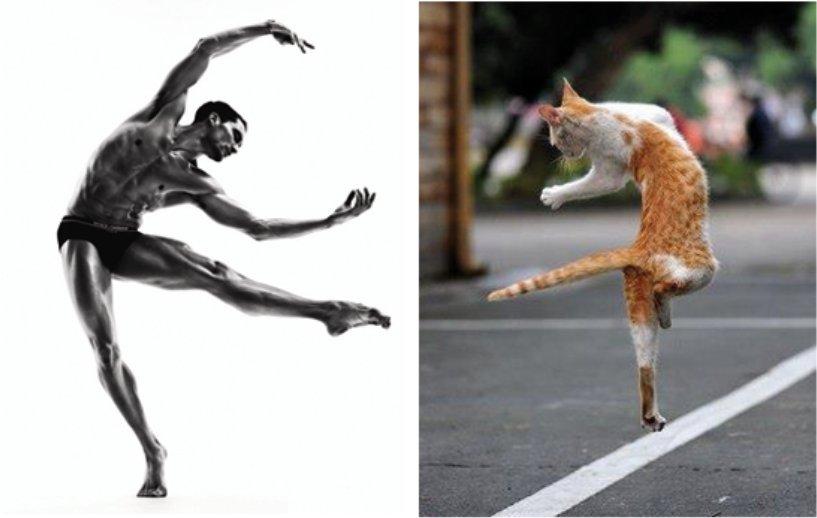des hommes et des chatons
