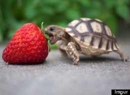 24 Tiny Turtles Who Need A Reality Check