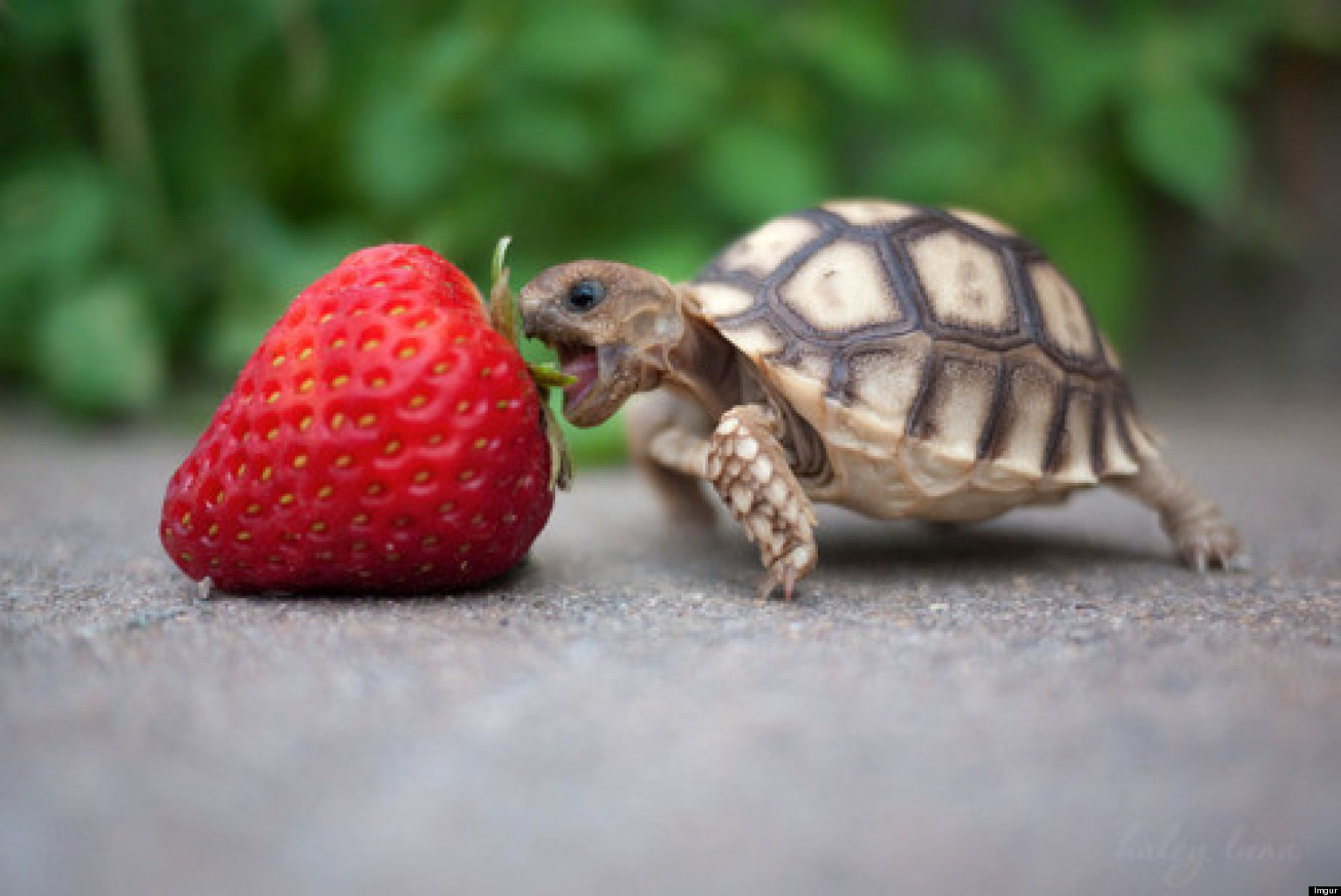 24 Tiny Turtles Who Need A Reality Check (PHOTOS)