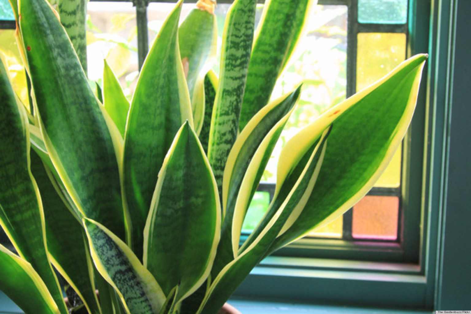 6 Houseplants That Are Low Maintenance And Easy To Care