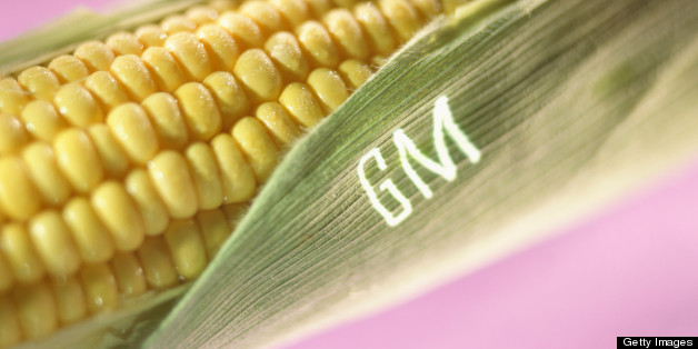 the risk of genetically engineered foods to humanity Genetically engineered foods- risk to humanity giant transnational companies are carrying out a dangerous global experiment by introducing large numbers of.