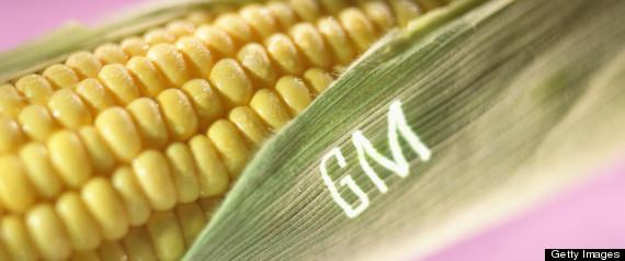 GENETICALLY ENGINEERED FOODS