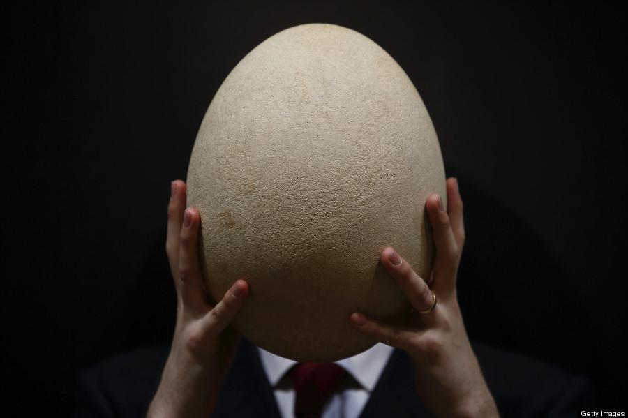 elephant bird egg auction