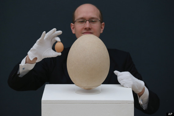 pre17th century elephant bird egg sells