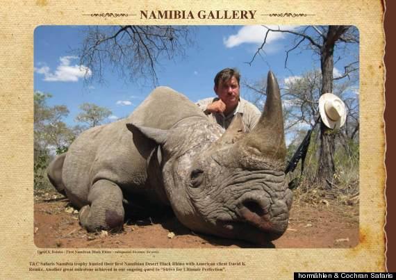 rhino horn trophy