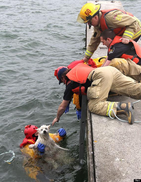 blind dog sea rescue