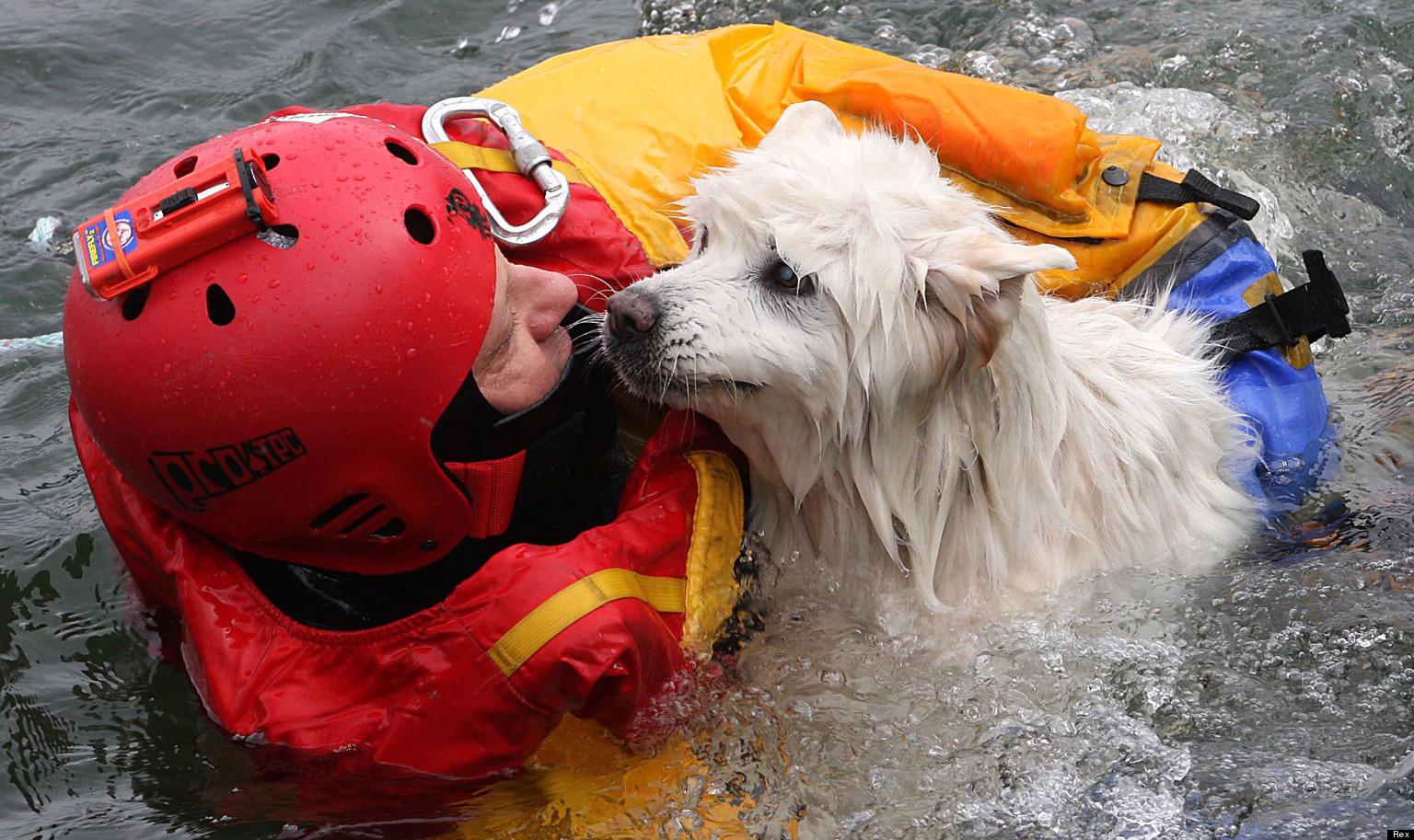 Samoyed Dog Rescue Ontario