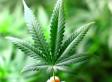Joseph L. Robertson's Marijuana Will Be Returned By Cops Who Seized It, Judge Orders