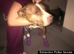 Man Charged After Dog Dragged Behind Pickup Truck
