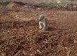 Koala Photo Shows Forest Destroyed By Loggers, Animal's Heartbreak After Losing Home
