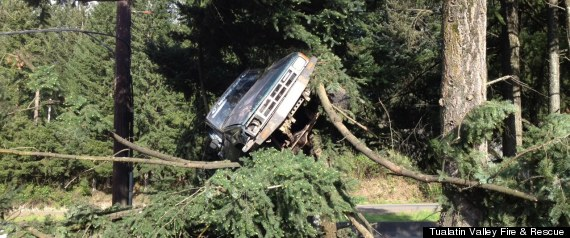 Truck In A Tree
