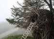 A Human Nest Is One Way To Save On Accommodation (PHOTOS)