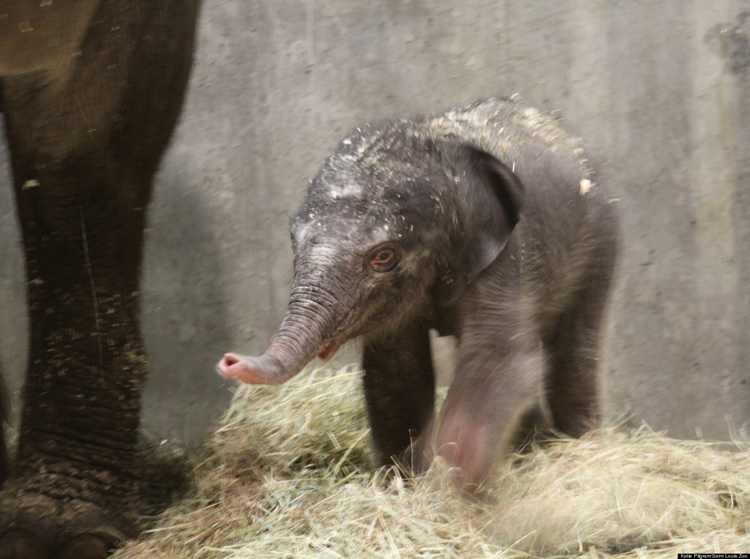 Elephant newborn baby - photo#26