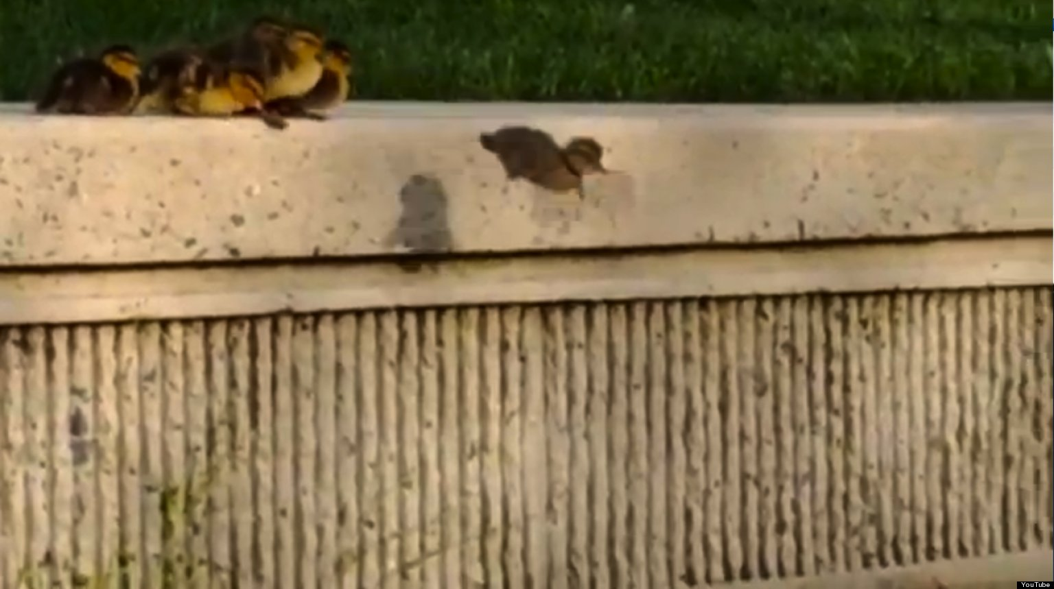 WATCH: Little Ducks vs. Big Ledge