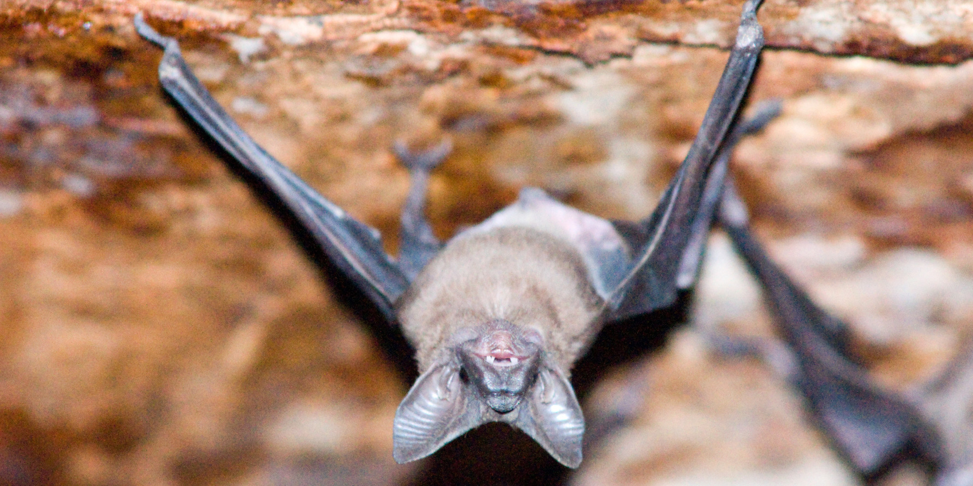 Virginia Caves Become Killing Chambers For Bats