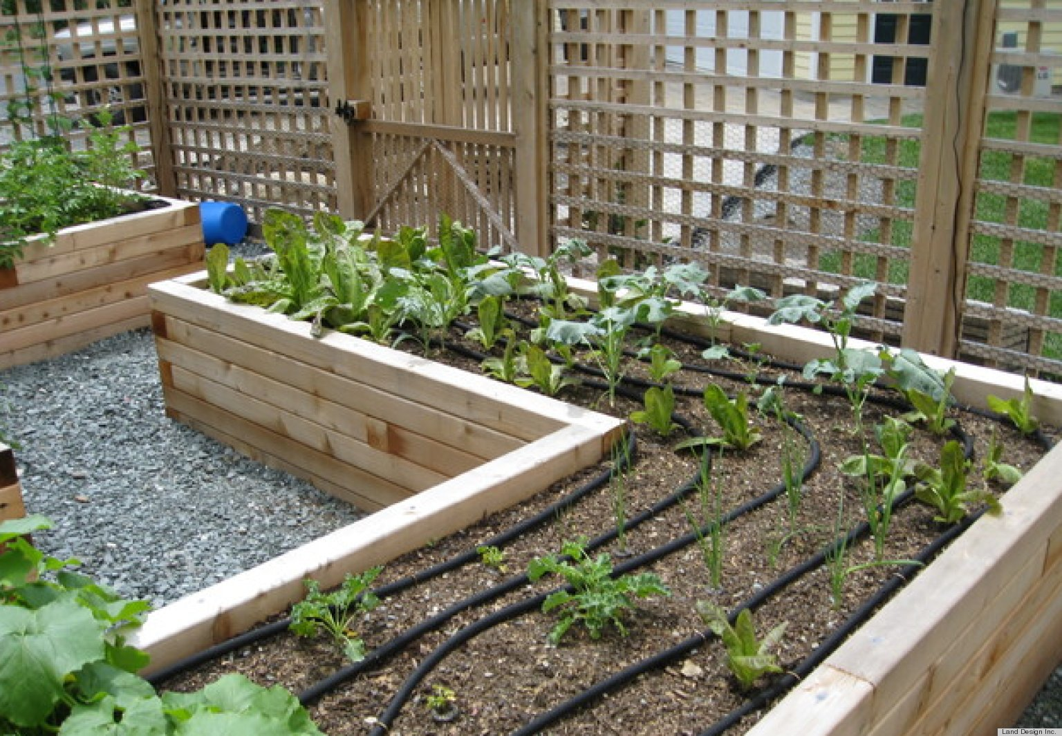 How To Build A Raised Vegie Garden  YouTube
