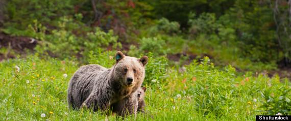 ALASKA MAN FIGHTS BEAR