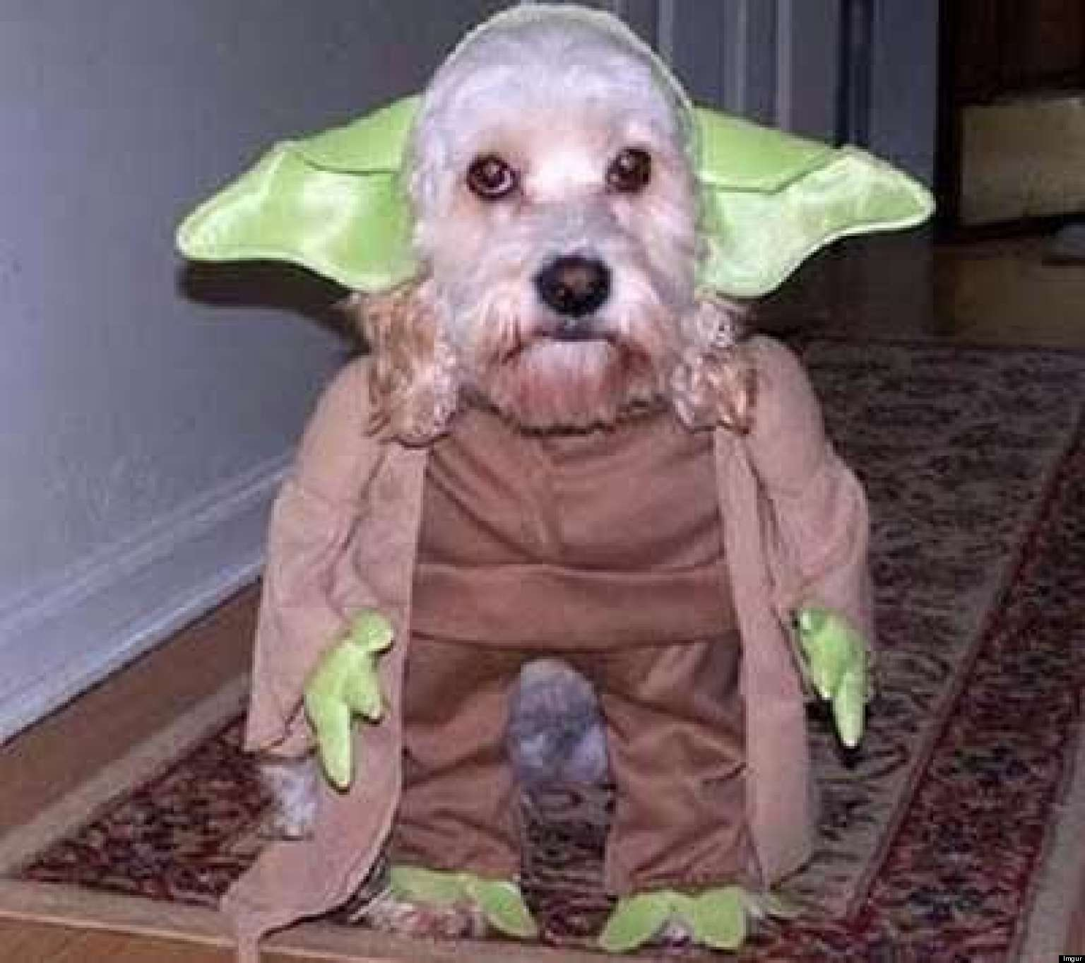 Funny Pictures of Animals Dressed up 15 Adorable Animals Dressed up